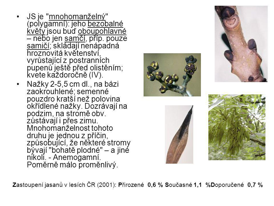 JS je mnohomanželný (polygamní): jeho bezobalné květy jsou buď oboupohlavné – nebo jen samčí, příp. pouze samičí; skládají nenápadná hroznovitá květenství, vyrůstající z postranních pupenů ještě před olistěním; kvete každoročně (IV).