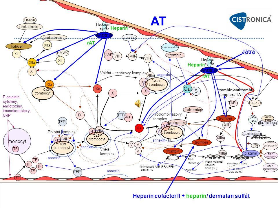 AT Játra Ca Heparin cofactor II + heparin/ dermatan sulfát Heparin