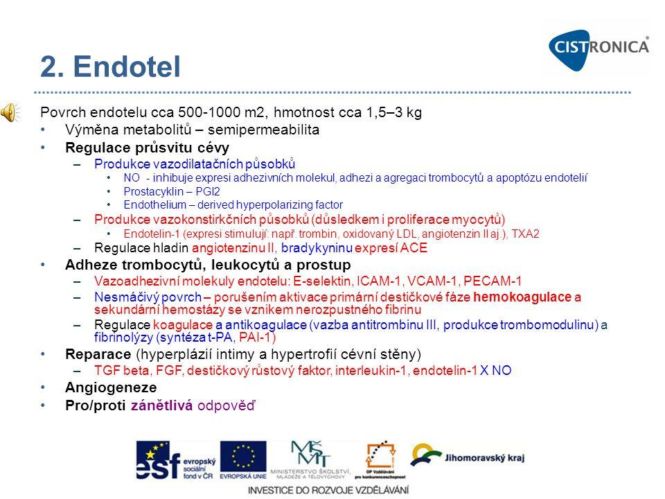 2. Endotel Povrch endotelu cca 500-1000 m2, hmotnost cca 1,5–3 kg