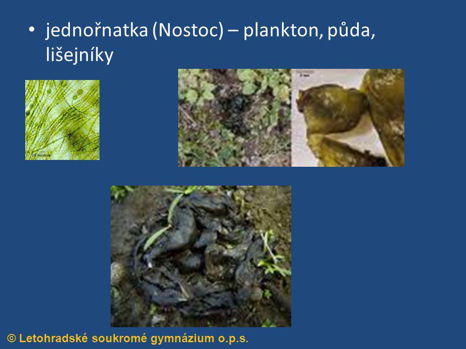 jednořnatka (Nostoc) – plankton, půda, lišejníky