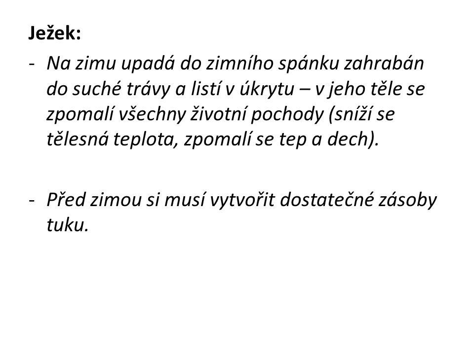 Ježek: