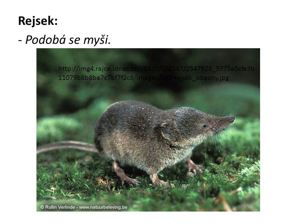 Rejsek: - Podobá se myši.