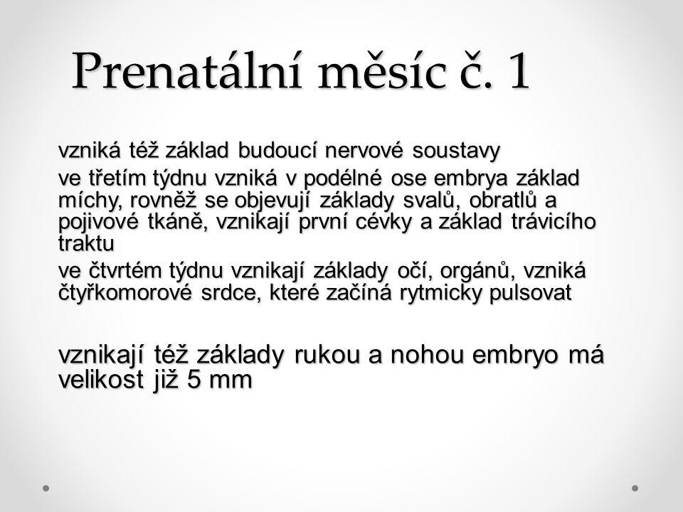 Prenatální měsíc č. 1 vzniká též základ budoucí nervové soustavy.