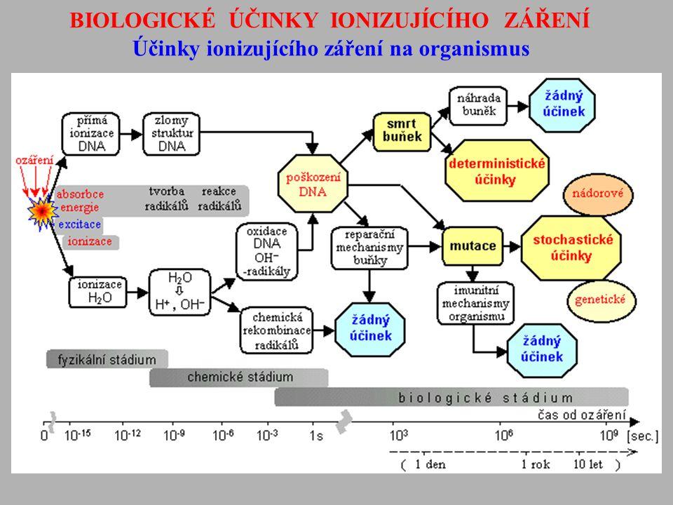 BIOLOGICKÉ ÚČINKY IONIZUJÍCÍHO ZÁŘENÍ