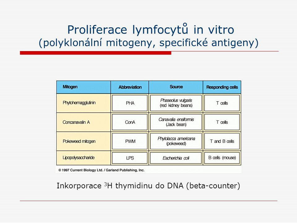 Proliferace lymfocytů in vitro (polyklonální mitogeny, specifické antigeny)