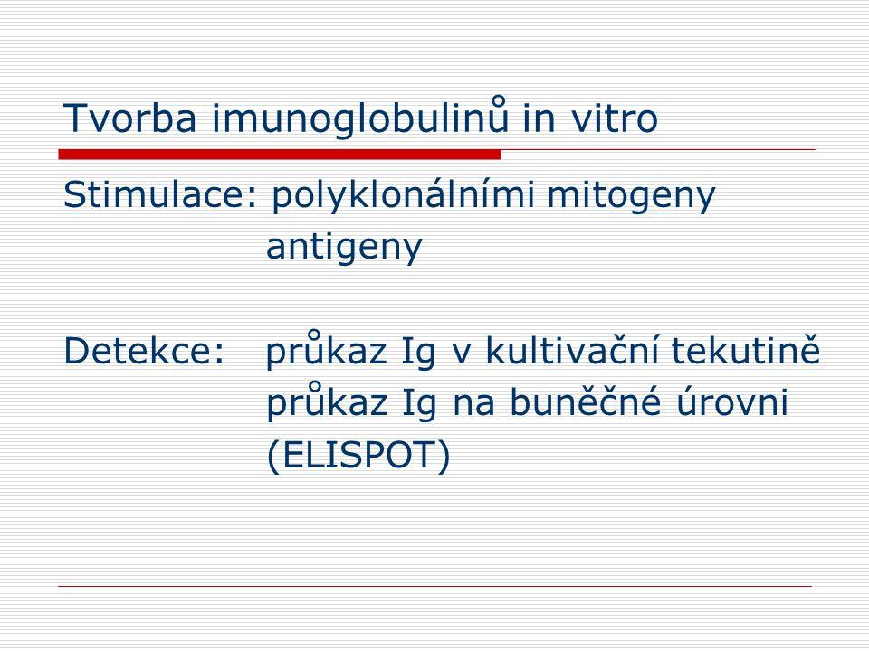 Tvorba imunoglobulinů in vitro