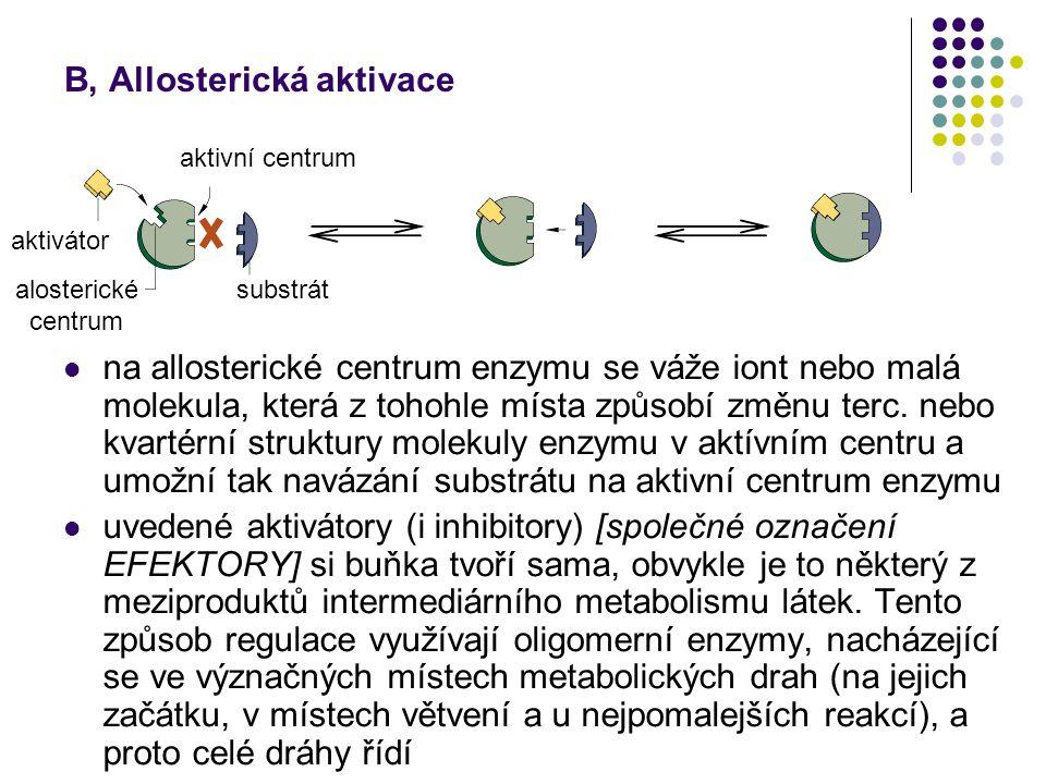 B, Allosterická aktivace