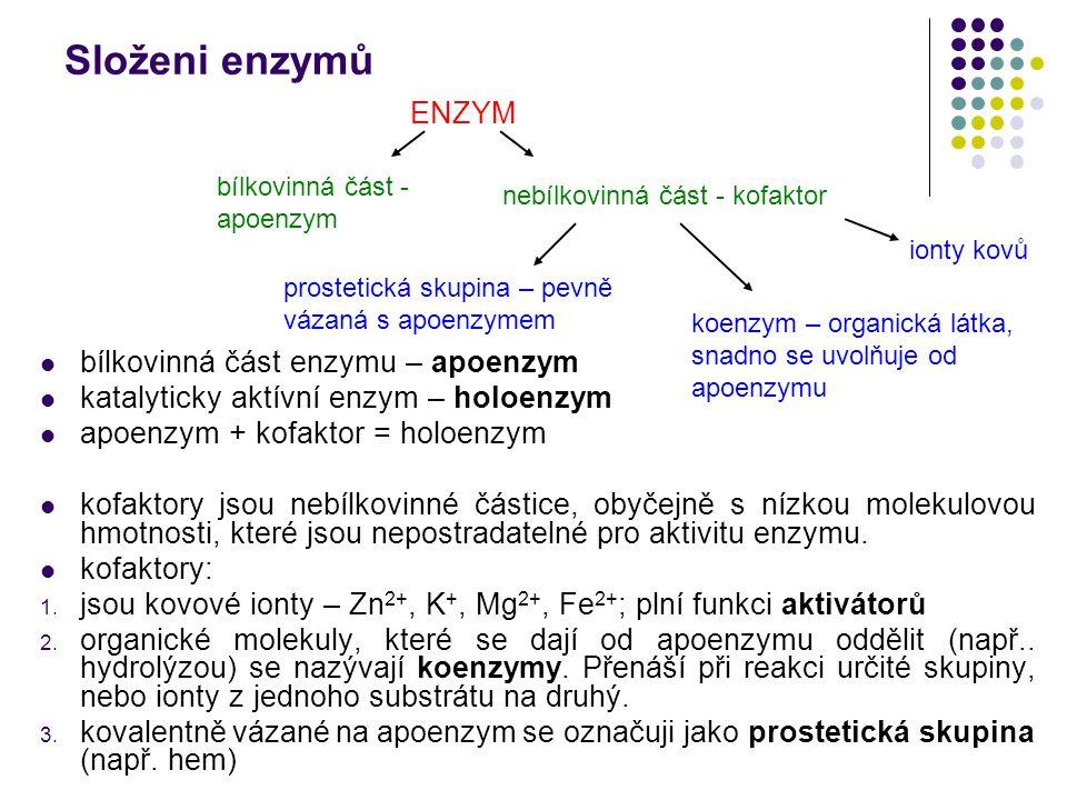 Složeni enzymů ENZYM bílkovinná část enzymu – apoenzym