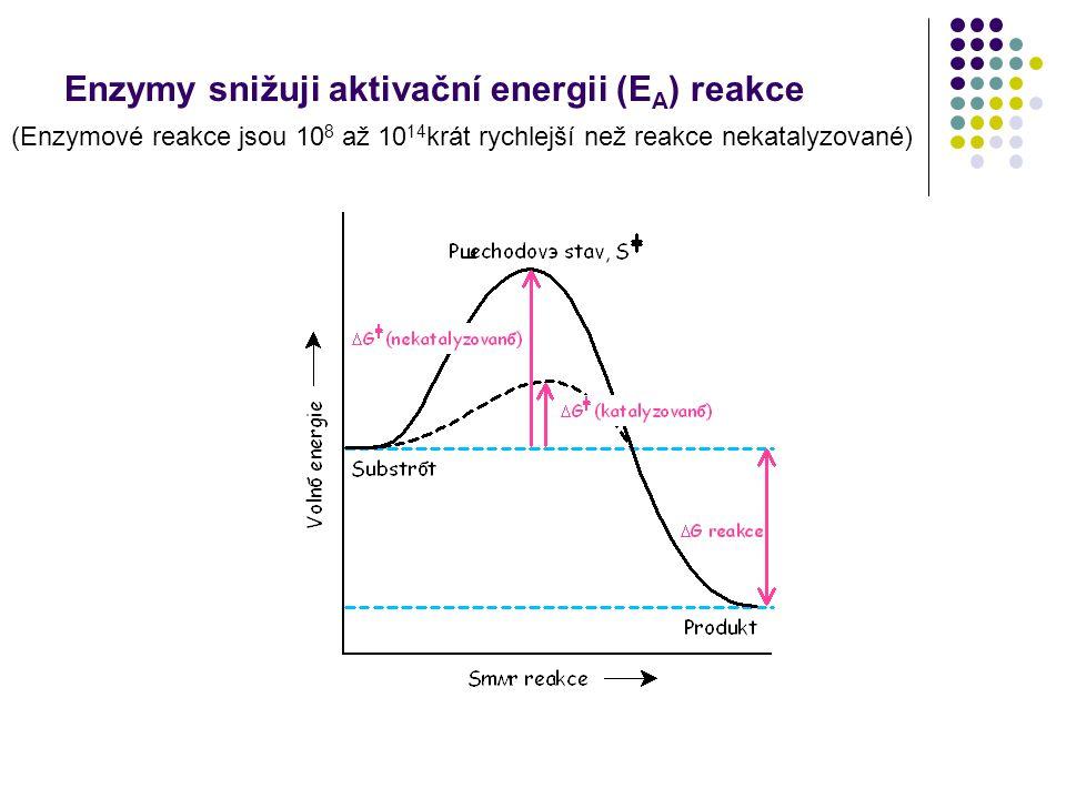 Enzymy snižuji aktivační energii (EA) reakce