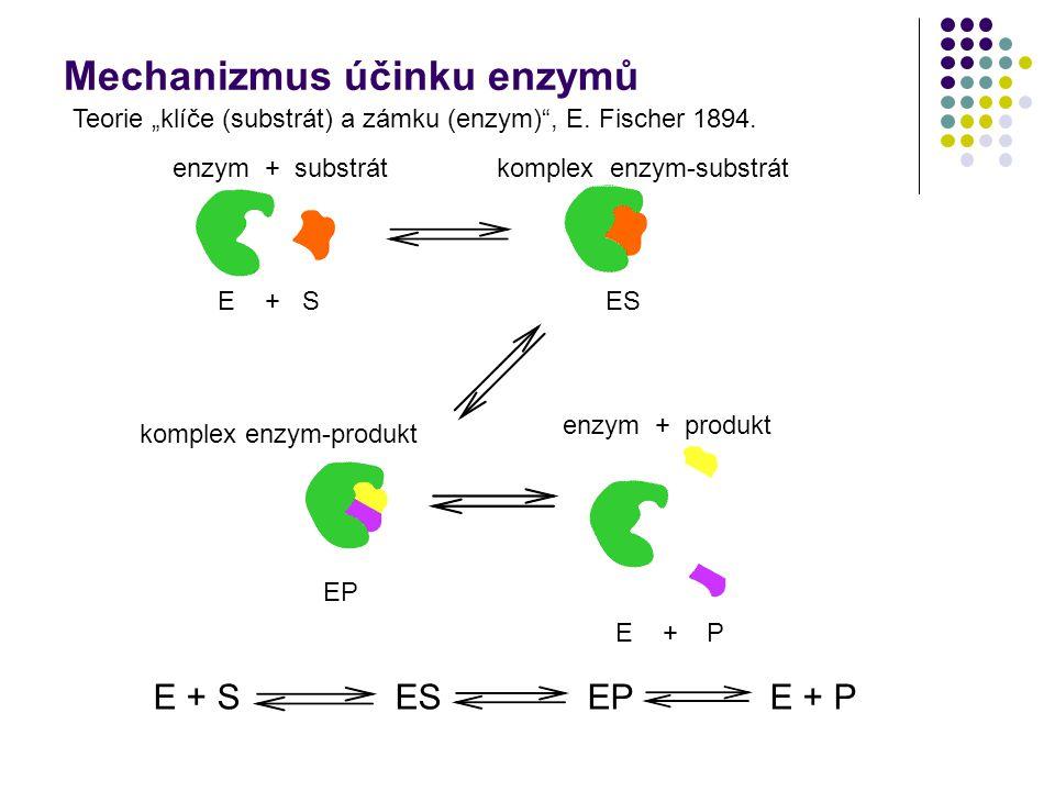 Mechanizmus účinku enzymů