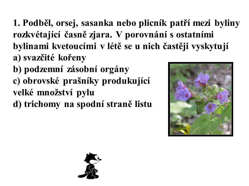 1. Podběl, orsej, sasanka nebo plicník patří mezi byliny rozkvétající časně zjara.