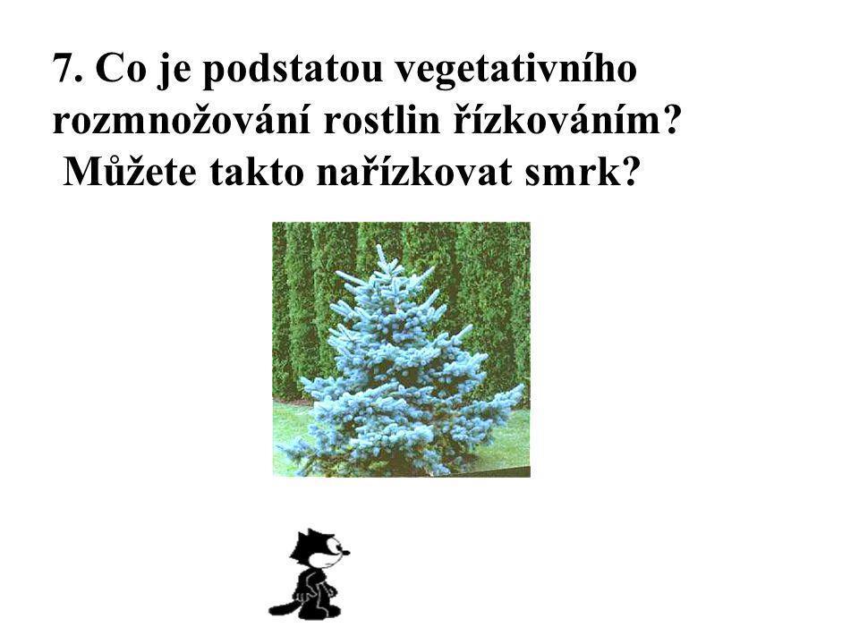 7. Co je podstatou vegetativního rozmnožování rostlin řízkováním