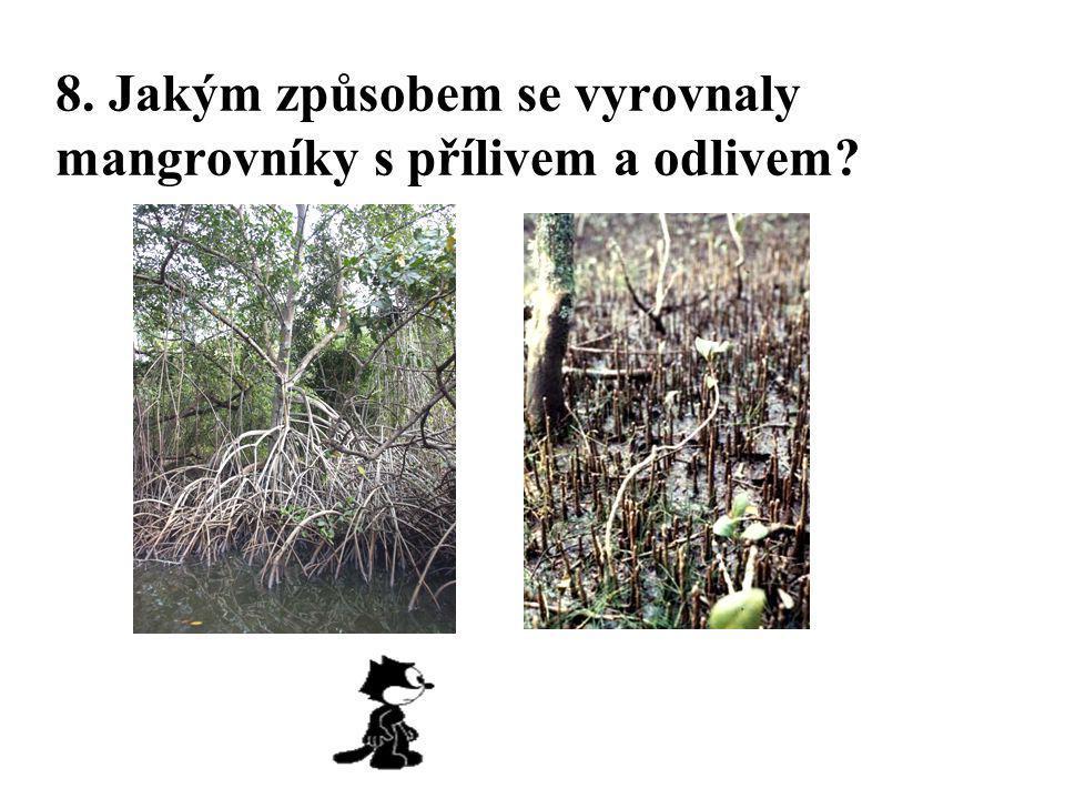 8. Jakým způsobem se vyrovnaly mangrovníky s přílivem a odlivem