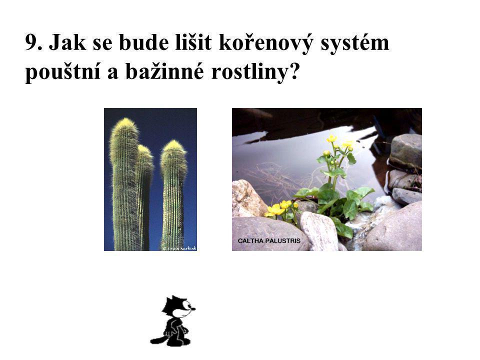 9. Jak se bude lišit kořenový systém pouštní a bažinné rostliny