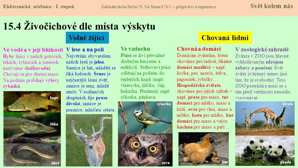 15.4 Živočichové dle místa výskytu