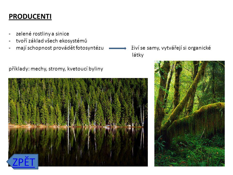 ZPĚT PRODUCENTI zelené rostliny a sinice tvoří základ všech ekosystémů