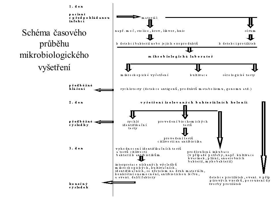 Schéma časového průběhu mikrobiologického vyšetření