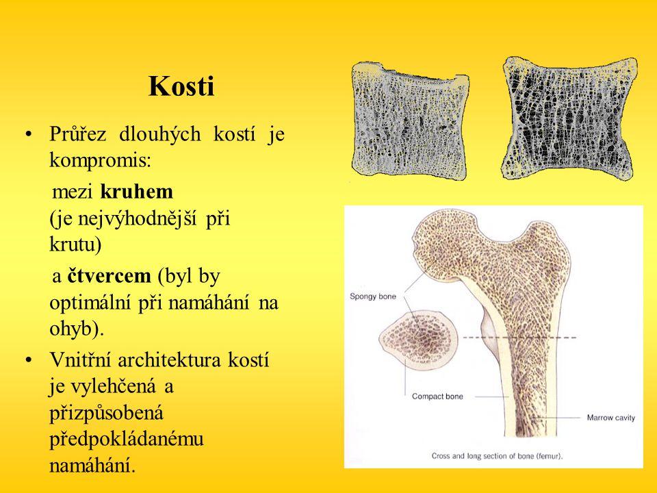 Kosti Průřez dlouhých kostí je kompromis: