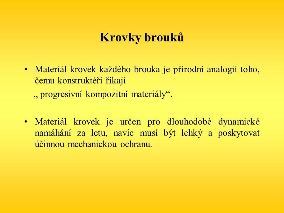 """Krovky brouků Materiál krovek každého brouka je přírodní analogií toho, čemu konstruktéři říkají. """" progresivní kompozitní materiály ."""