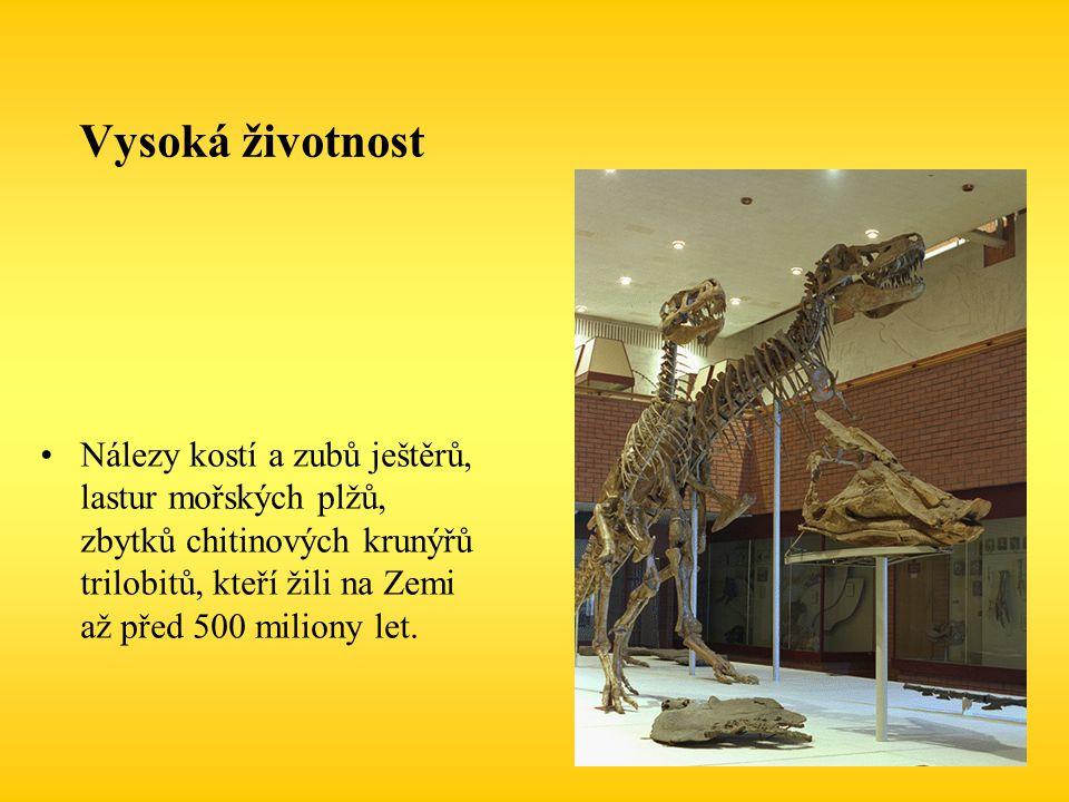 Vysoká životnost Nálezy kostí a zubů ještěrů, lastur mořských plžů, zbytků chitinových krunýřů trilobitů, kteří žili na Zemi až před 500 miliony let.