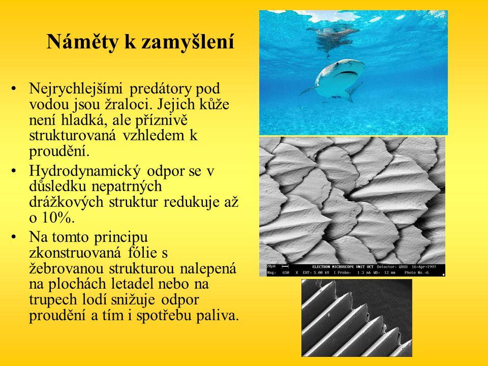 Náměty k zamyšlení Nejrychlejšími predátory pod vodou jsou žraloci. Jejich kůže není hladká, ale příznivě strukturovaná vzhledem k proudění.