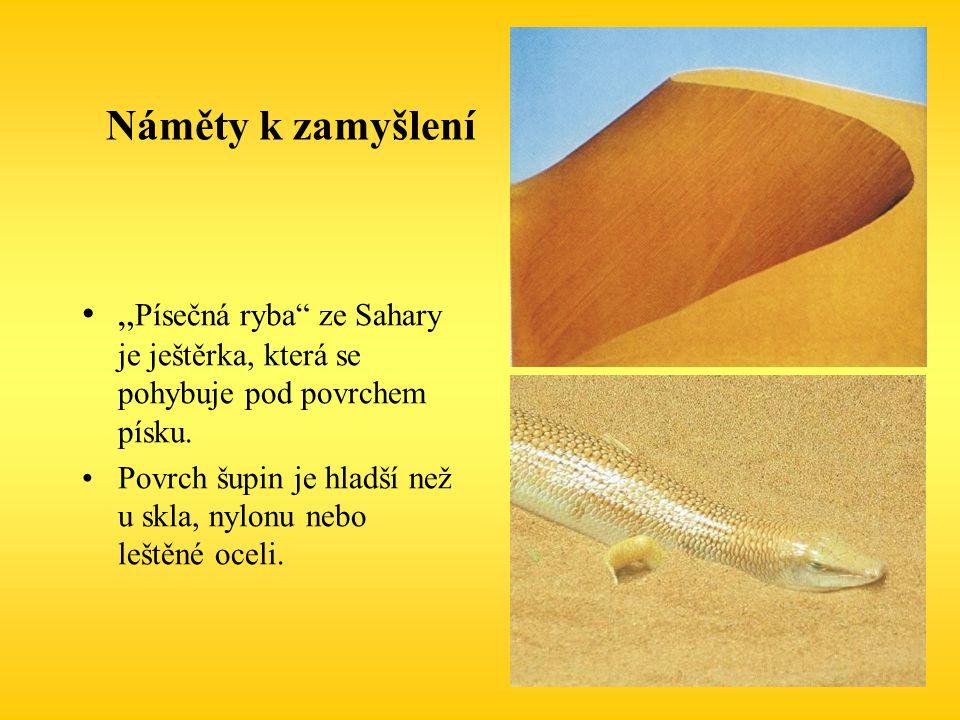 """Náměty k zamyšlení """"Písečná ryba ze Sahary je ještěrka, která se pohybuje pod povrchem písku."""