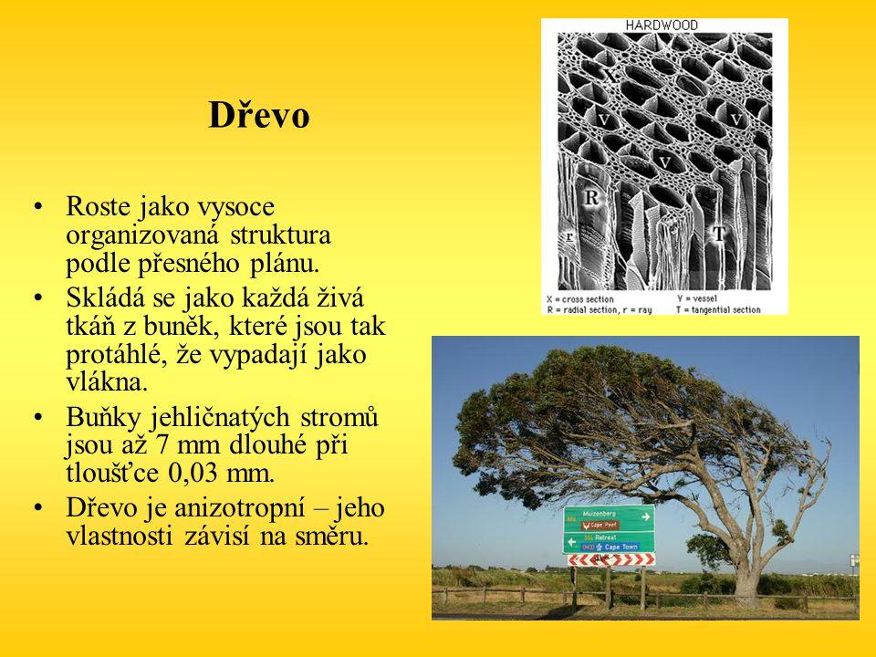 Dřevo Roste jako vysoce organizovaná struktura podle přesného plánu.