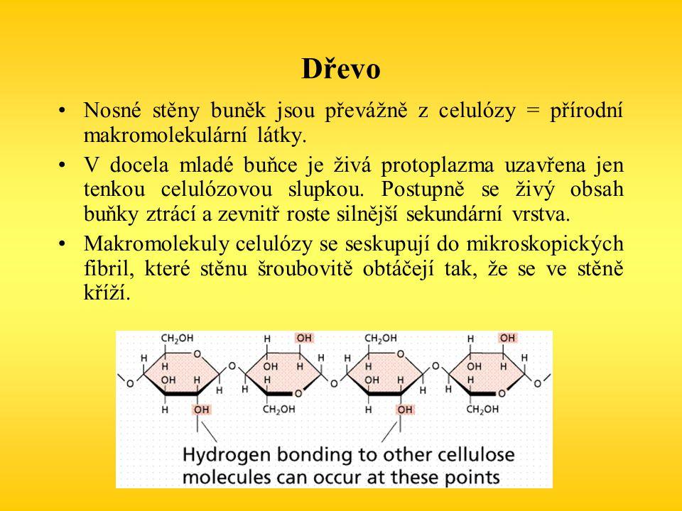 Dřevo Nosné stěny buněk jsou převážně z celulózy = přírodní makromolekulární látky.