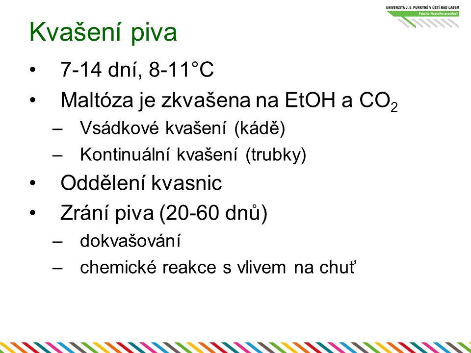 Kvašení piva 7-14 dní, 8-11°C Maltóza je zkvašena na EtOH a CO2