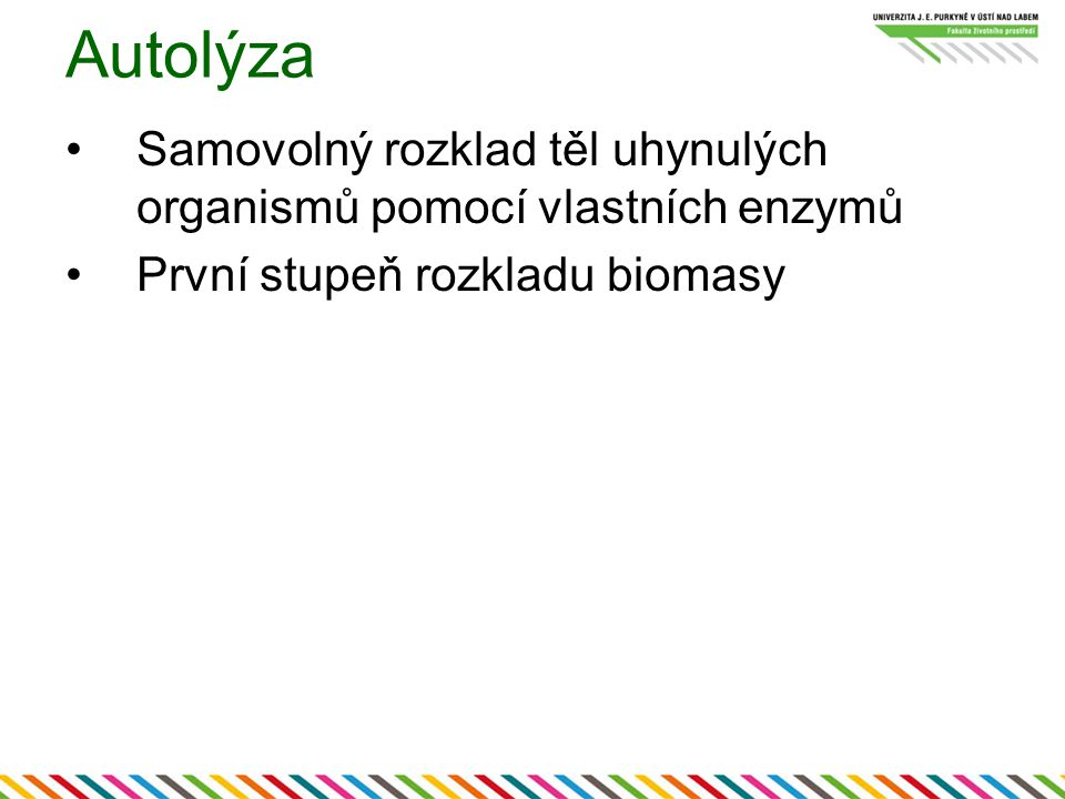 Autolýza Samovolný rozklad těl uhynulých organismů pomocí vlastních enzymů.