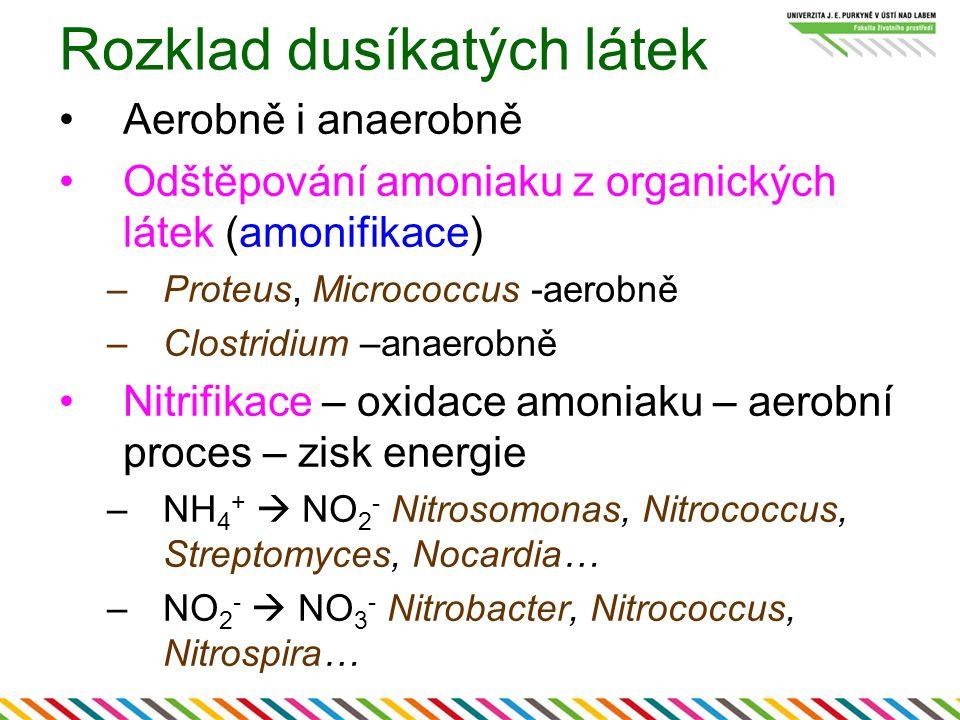 Rozklad dusíkatých látek