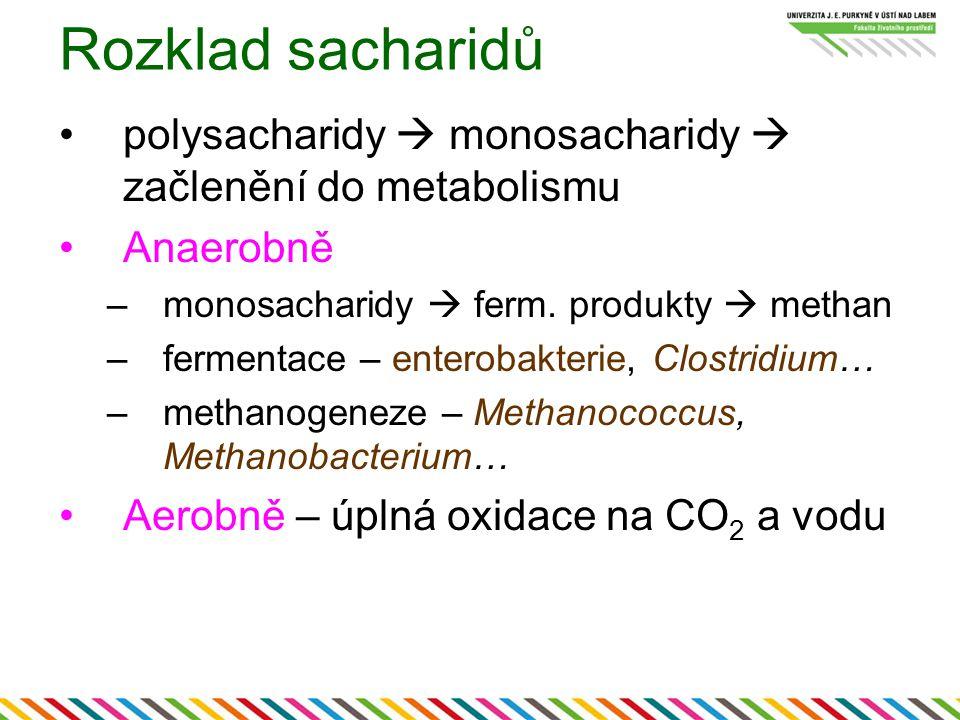 Rozklad sacharidů polysacharidy  monosacharidy  začlenění do metabolismu. Anaerobně. monosacharidy  ferm. produkty  methan.