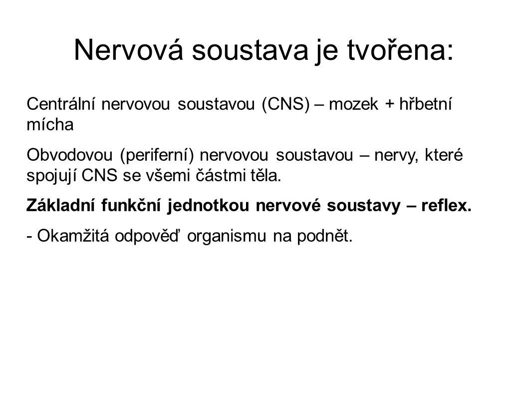 Nervová soustava je tvořena: