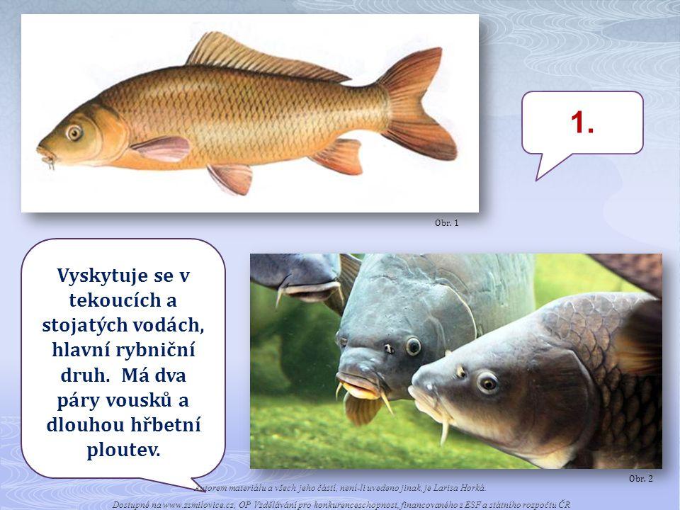 Obr. 1 1. Vyskytuje se v tekoucích a stojatých vodách, hlavní rybniční druh. Má dva páry vousků a dlouhou hřbetní ploutev.