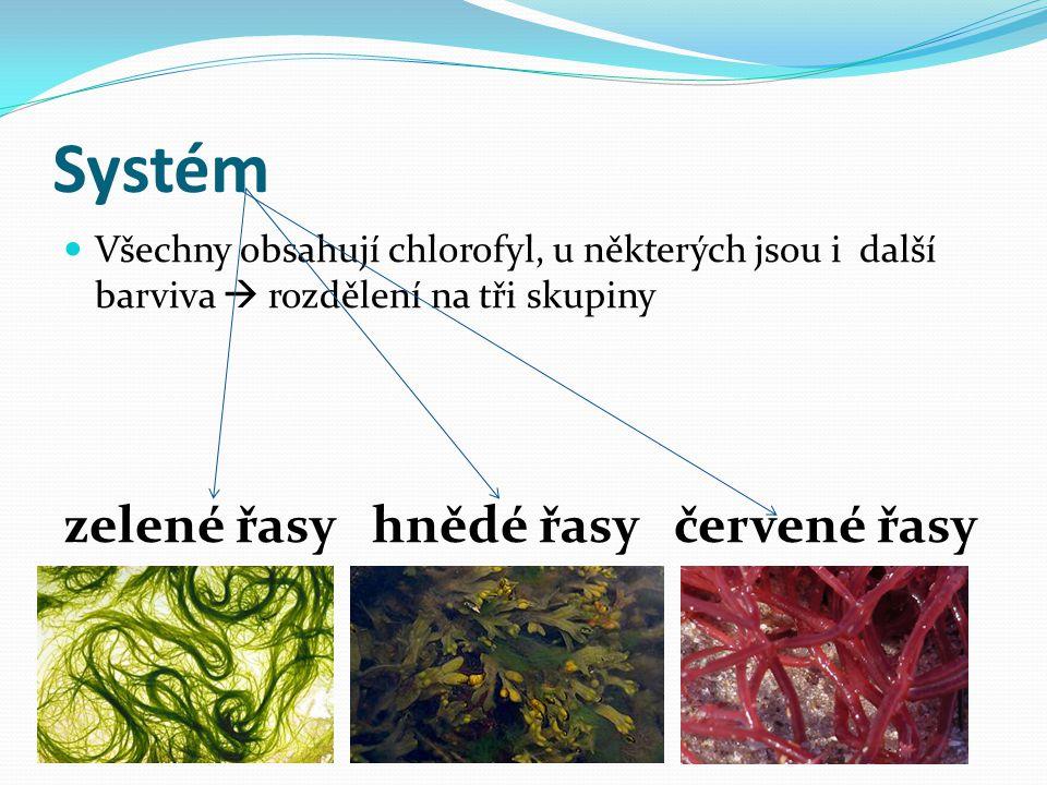 Systém zelené řasy hnědé řasy červené řasy