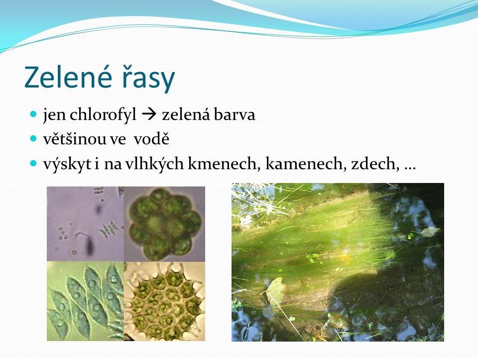 Zelené řasy jen chlorofyl  zelená barva většinou ve vodě