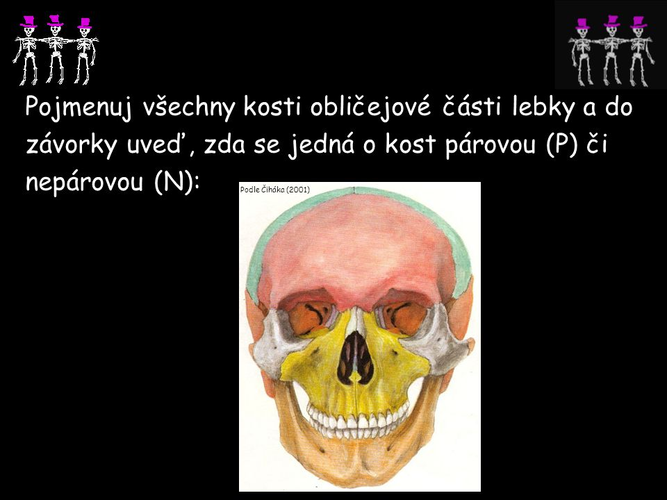 Pojmenuj všechny kosti obličejové části lebky a do závorky uveď, zda se jedná o kost párovou (P) či nepárovou (N):