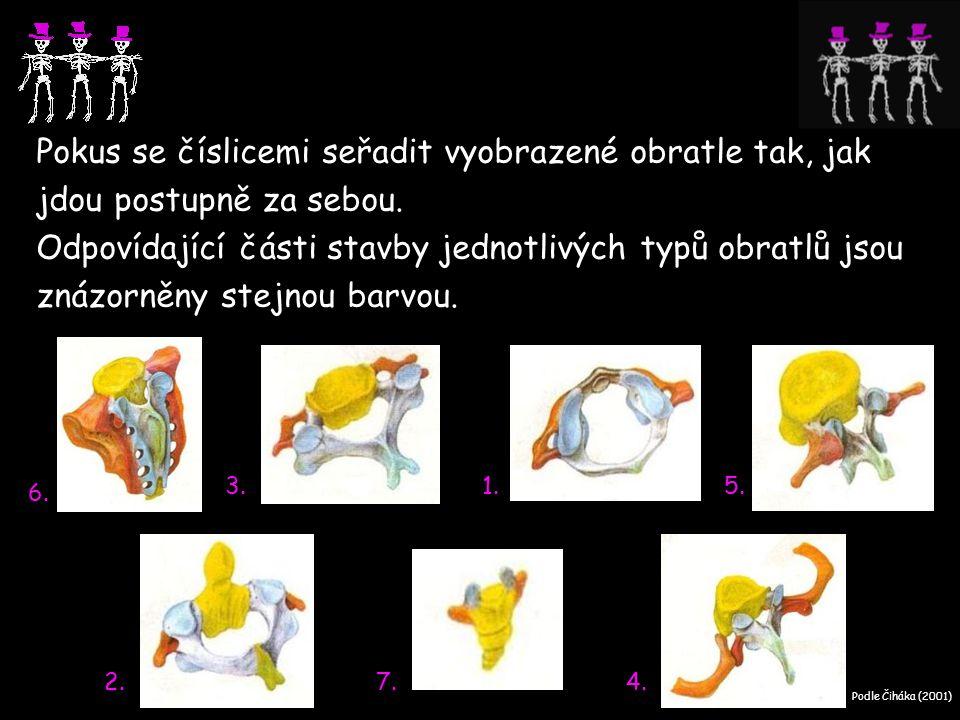 Pokus se číslicemi seřadit vyobrazené obratle tak, jak jdou postupně za sebou. Odpovídající části stavby jednotlivých typů obratlů jsou znázorněny stejnou barvou.
