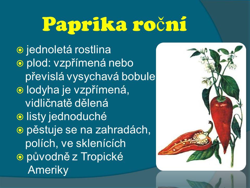 Paprika roční jednoletá rostlina plod: vzpřímená nebo