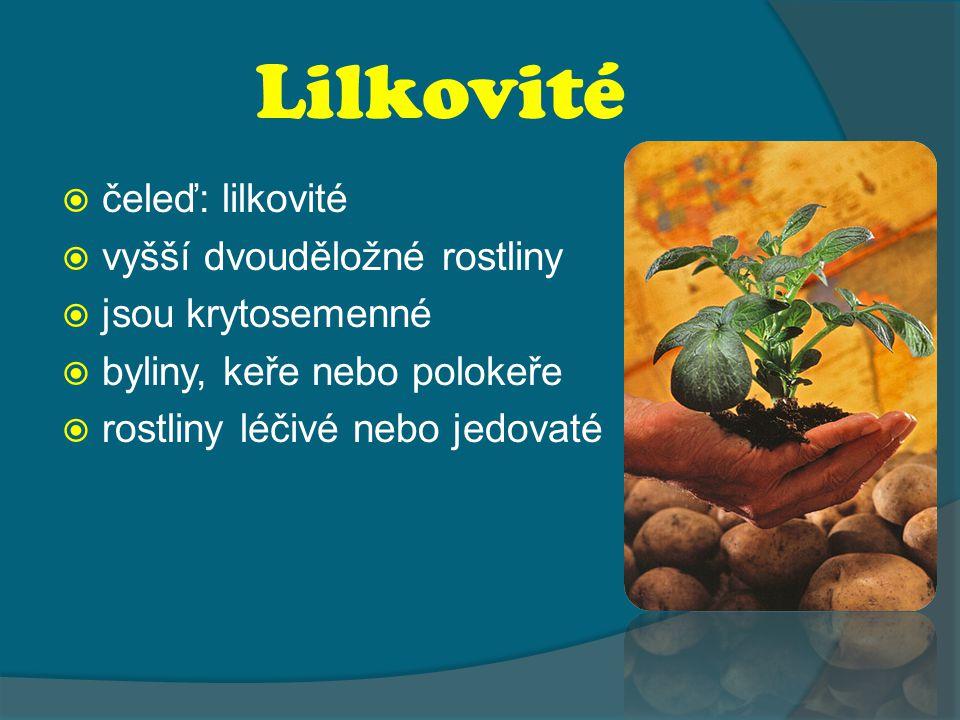 Lilkovité čeleď: lilkovité vyšší dvouděložné rostliny
