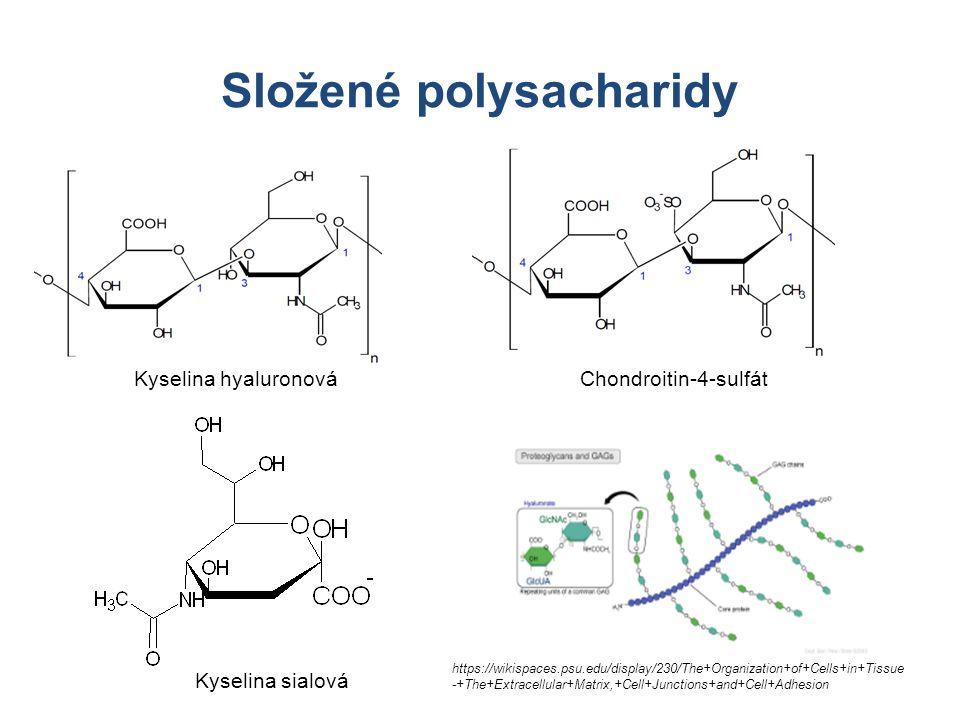 Složené polysacharidy