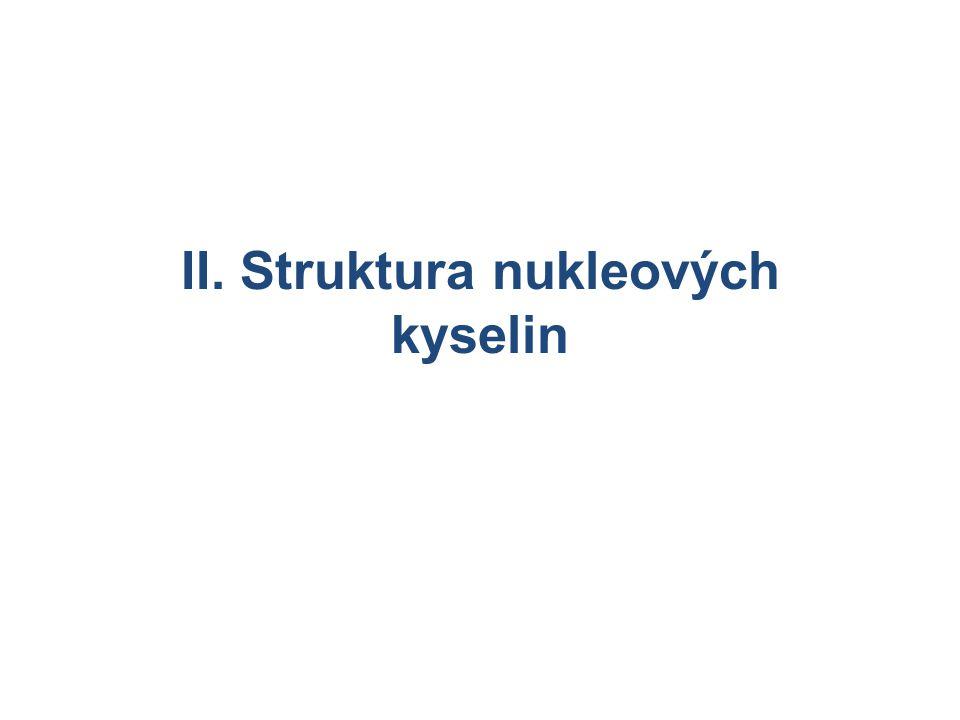 II. Struktura nukleových kyselin