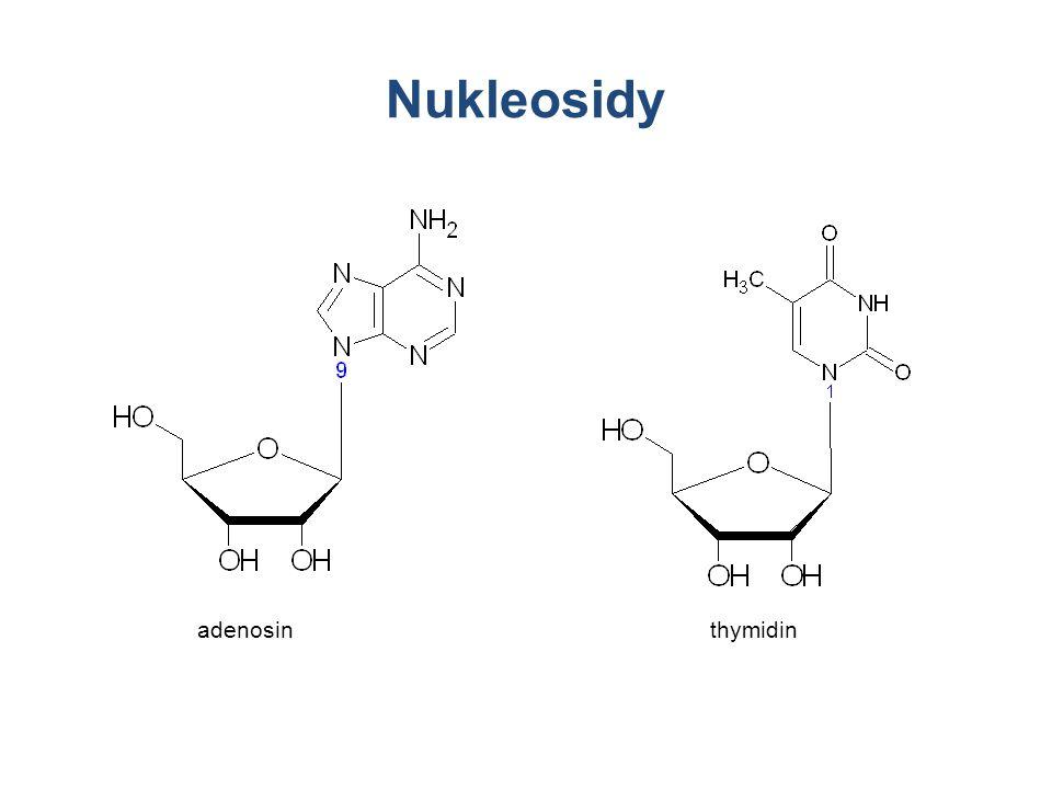 Nukleosidy Nukleosid: báze+cukr adenosin thymidin