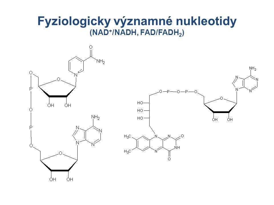 Fyziologicky významné nukleotidy (NAD+/NADH, FAD/FADH2)