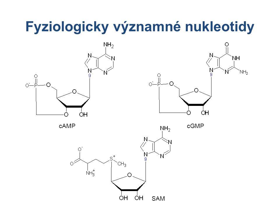 Fyziologicky významné nukleotidy