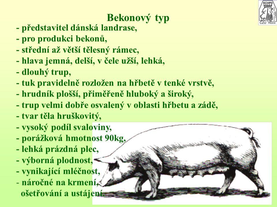 Bekonový typ - představitel dánská landrase, - pro produkci bekonů,