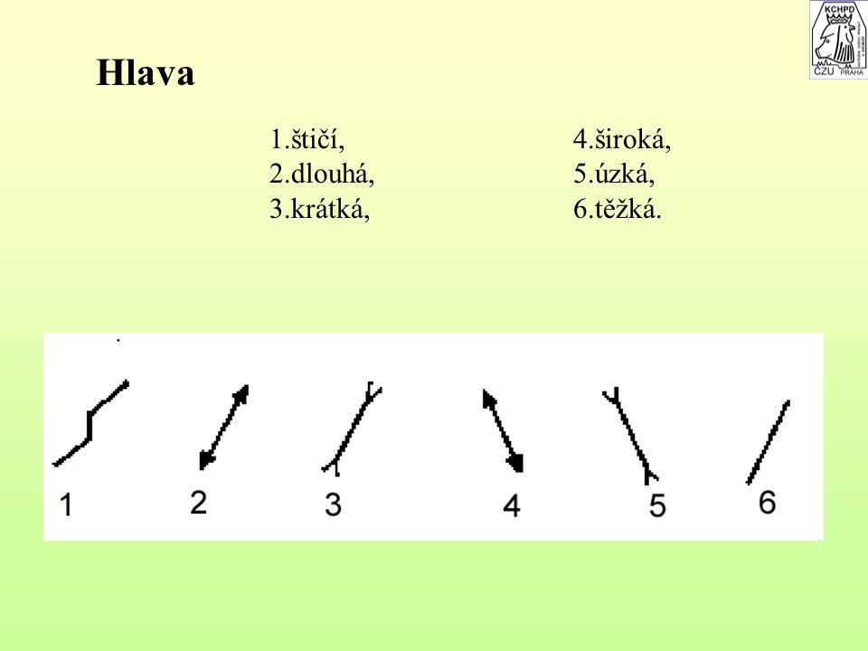 Hlava 1.štičí, 2.dlouhá, 3.krátká, 4.široká, 5.úzká, 6.těžká.