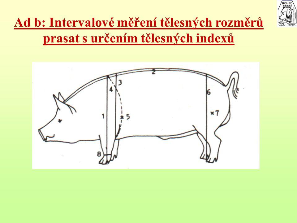 Ad b: Intervalové měření tělesných rozměrů prasat s určením tělesných indexů