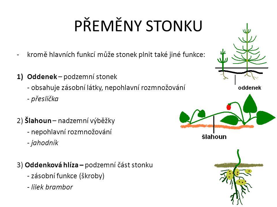 PŘEMĚNY STONKU kromě hlavních funkcí může stonek plnit také jiné funkce: Oddenek – podzemní stonek.