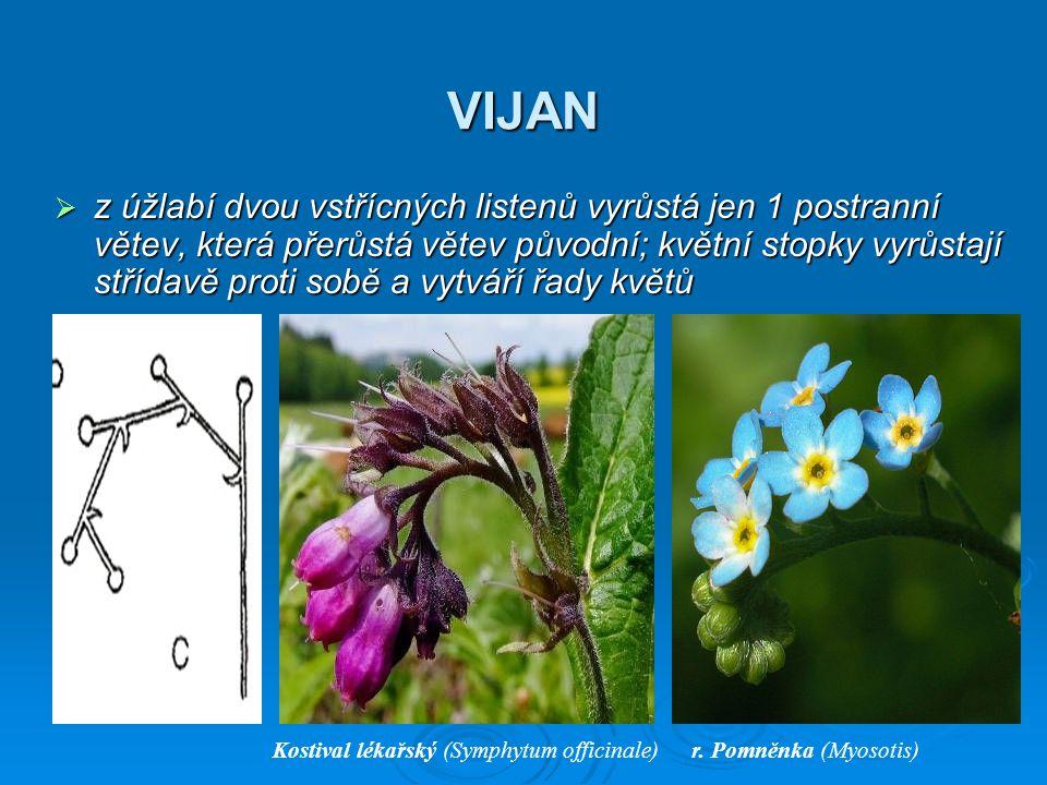 VIJAN